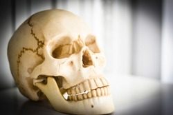 The skull human put down white table close up concept, the cranium is especially the part enclosing the brain. The human body part is shown in a laboratory for education.