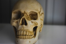 The skull human put down white table close up concept, the cranium is especially the part enclosing the brain. The human body part is shown in the laboratory for education.