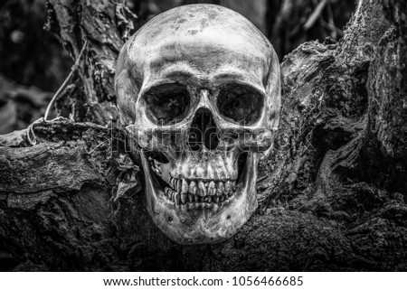 The skull is a symbol of horror and death. In the cemetery. white and black