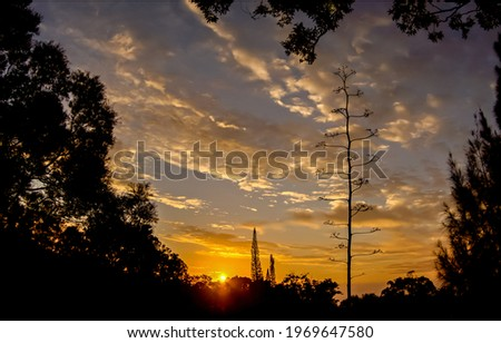 The sky in the forest at sunset. Sunset forest sky. Sunset cloudy sky view