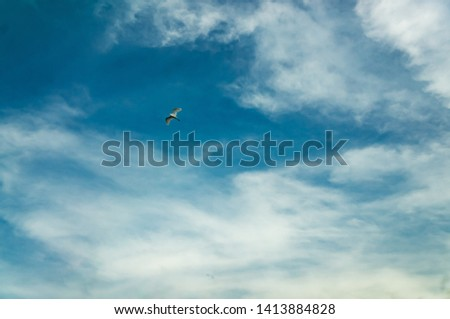 The sky with a bird flying #1413884828