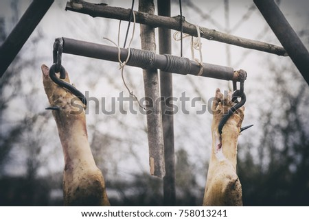 The slaughtered pig is hangs on a hook, hanging on a tripod, the process of freshening, Western Ukraine #758013241