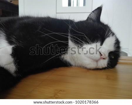 The sleepy black cat. #1020178366