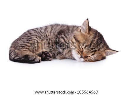 The small British kitten sleeps on one side.