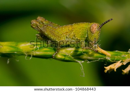 The small grasshopper sits on a branch and pads holds a branch part #104868443