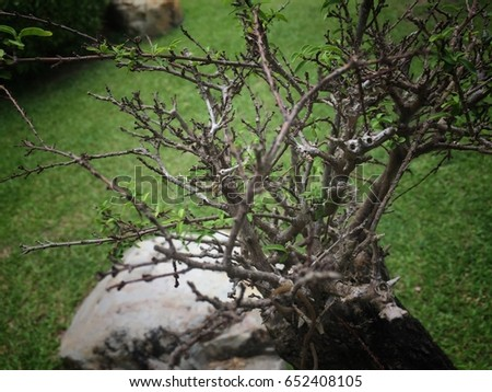 The small green leaves were plant on dried branches,the contrast of alive and not alive,in abstract design,art style,blurry light around.beauty by nature. #652408105