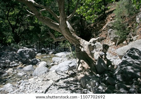 The small mountain river with stony riversides, the big dried tree and the big white stones in the gorge in the sunny day #1107702692