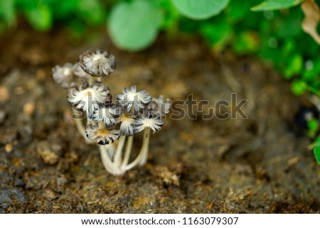 The small mushrooms is the type of decomposer  that grow on the soil
