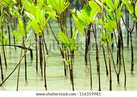 The Small of mangrove forest and sea water