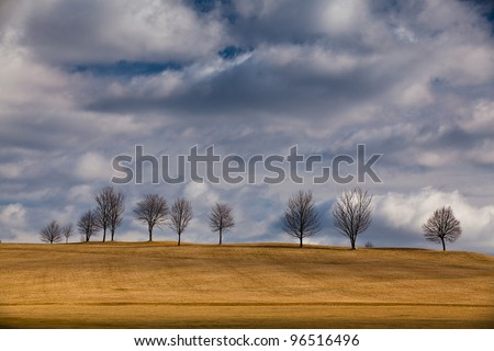 The small trees on golf course in autumn