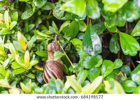 The snail eats leaves