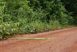 The snake tries to crawl across the country road. Snake slither on the road
