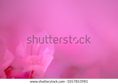 The soft pink bougainvillea flowers background. #1057853981