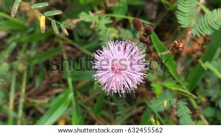 The Sphere flower. #632455562