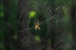 The spider climbs on the web.