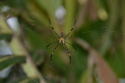 The spider is a type of bookbed animal (arthropod) with two body segments, four pairs of legs, is wingless, and does not have a chewing mouth
