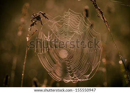 The spider of nature  #155550947