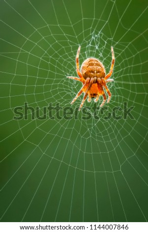 The spider species Araneus diadematus is commonly called the European garden spider, diadem spider, cross spider and crowned orb weaver. #1144007846