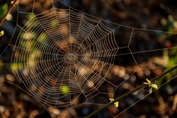 The spider web background