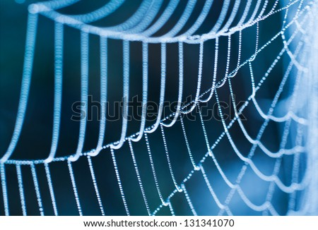 The Spider Web close up.