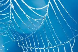 The Spider Web close up. Blue color tone.