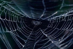 The Spider Web closeup in a darkness