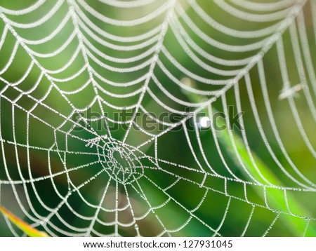 The spider web (cobweb) closeup background. #127931045