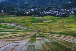 The Spider Web Rice Fields. The beautiful of patterns of rice fields described local wisdom of Flores people in Indonesia.