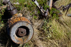 the spoke less hub of an old wooden and steel wagon rusted and orange lichen  amongst the tall grasses an nettles