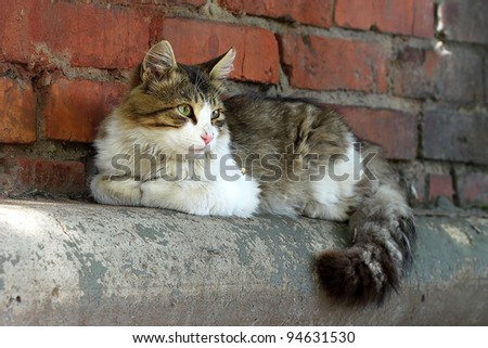 The spotty cat sits on eaves of the brick house