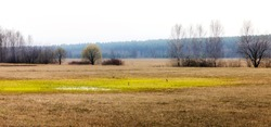 The spring field in early spring is beautiful. It feels fresh, nature wakes up, migratory birds fly away and return. Fresh air is good for the health of birds, animals and humans. We protect nature