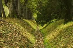 The steep shores of the milarious ditch covered with green grass and autumn leaves fall into the park along the path under the branches of trees.