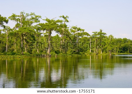The still waters of a Florida swamp.