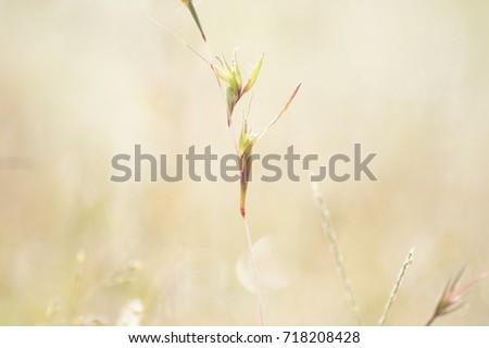 the stillness of grass #718208428