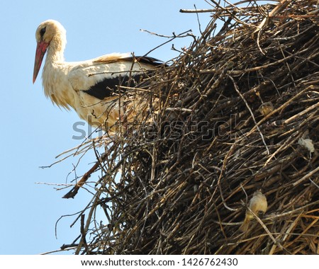 The stork sits in its large nest, and under it sparrows sit in the branches, finding shelter there in spring. Hostel.