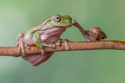 the story about frog prince, friendship of snail and frog