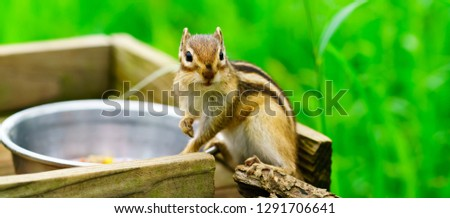 The story of a chipmunks (Chipmunks in nature)