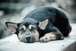 The stray dog resting on concrete wall