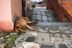 The street dog is sleeping. Next to the concept of stray animals trash, environmental pollution concept.