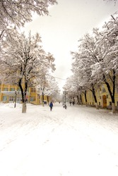 The street with yellow buildings at the edges, snow-covered trees, streetlights in the winter