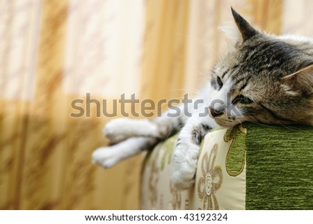 The striped cat sleeps on a sofa