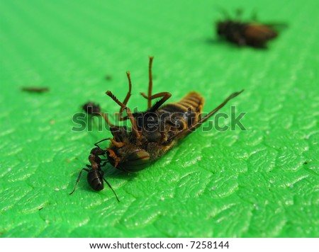 The strong ant drags extraction, which on much more it on weight and the size