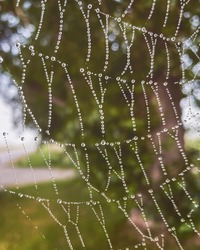 The structure and design of the spider web are covered with dew drops in the fog. Macro close up photo of autumn day