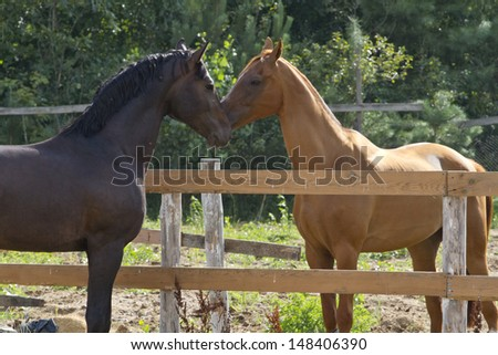 The struggle for leadership between the two horses.