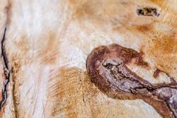 the stump of felled tree
