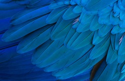 The stunning beauty of nature. Gold and blue macaw ( ara ararauna)
