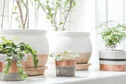 The stylish interior of home garden with different ceramic and concrete pots on the window sill.