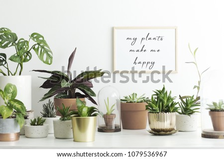 The stylish room filled with a lot of modern plants in different clay pots. Modern composition of home garden with mock up poster frame.