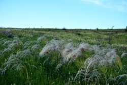 The summer forbs of the steppe amazes with its splendor.