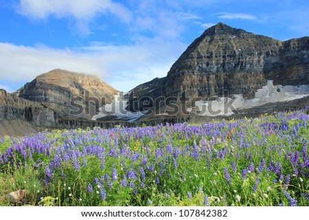 The summit of mount Timpanogos, Utah, above a meadow of beautiful wildflowers.